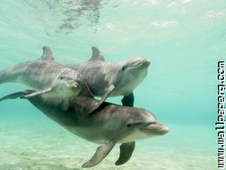 Animals dolphins sea awes
