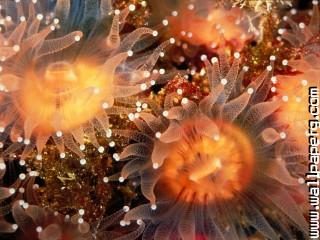 Animals sea anemones awes