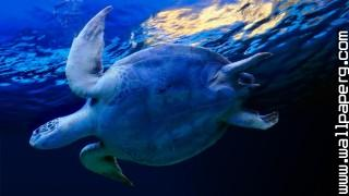 Animals sea sea turtles t