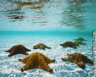 Animals sea starfish awesome wallpaper