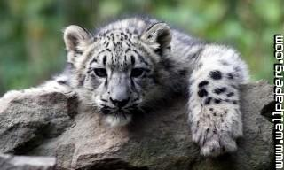Young animals 16 ,wide,wallpapers,images,pictute,photos