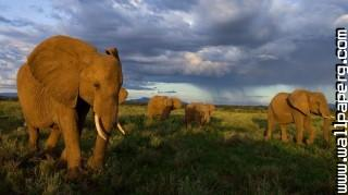 Elephants(1) ,wide,wallpapers,images,pictute,photos