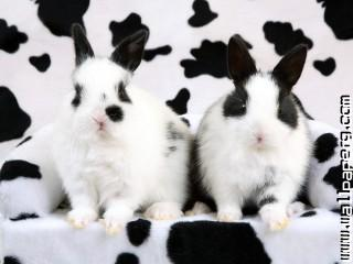 Animals rabbits awesome wallpaper
