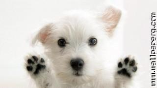 Dog on your screen ,wide,wallpapers,images,pictute,photos