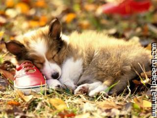 Animals canine dogs pets shoes awesome wallpaper