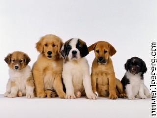 Dogs puppies awesome wallpaper(1)
