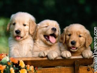 Dogs puppies awesome wallpaper