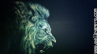 Animals lions wild animals awesome wallpaper