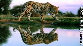 Flections wild animals awesome wallpaper