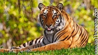 Idescreen wild animals awesome wallpaper