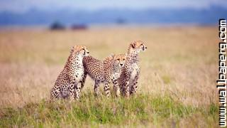 Y savanna wild animals awesome wallpaper