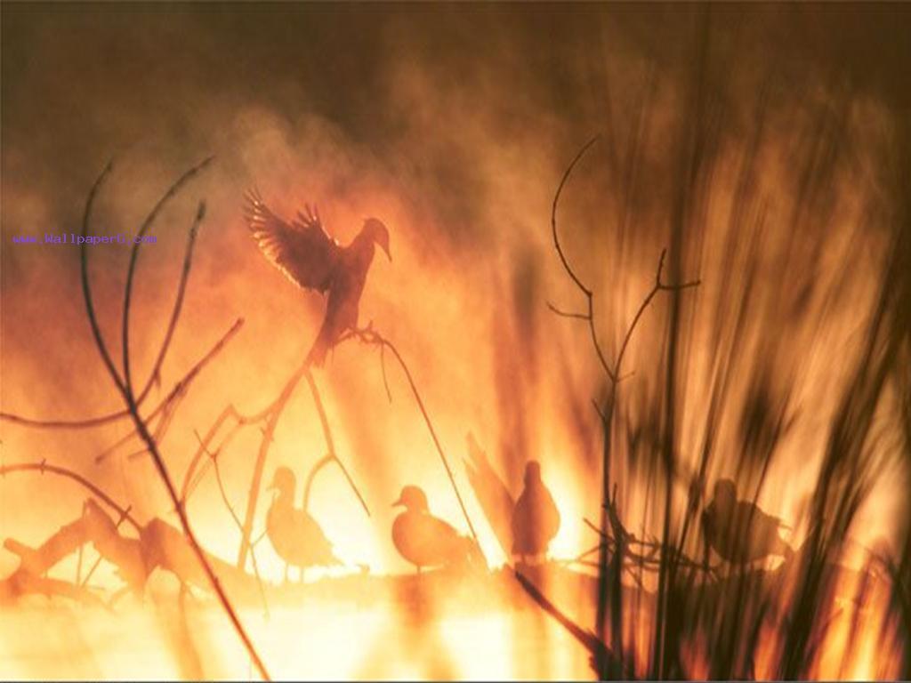 The burning birds
