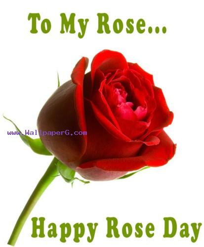 Happy rose day ,wide,wallpapers,images,pictute,photos