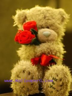 Teddy bear with red rose ,wide,wallpapers,images,pictute,photos