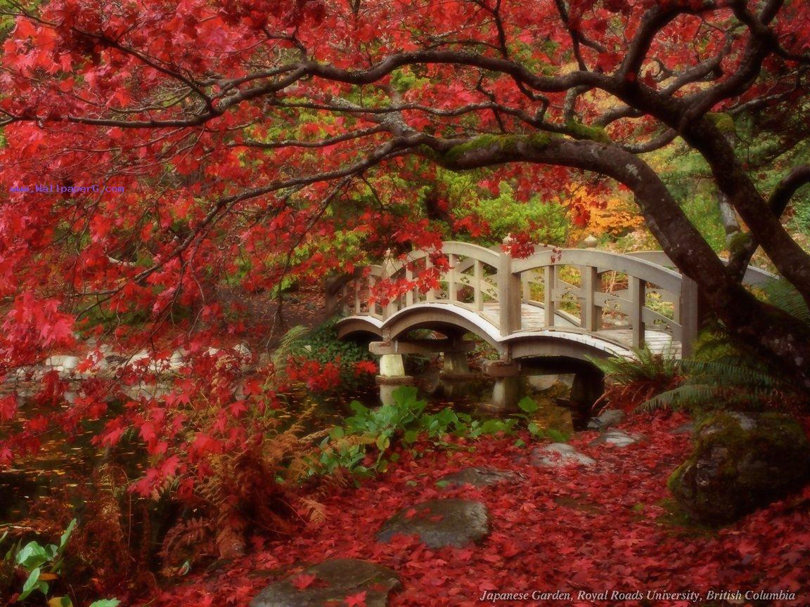 Japanese garden ,wide,wallpapers,images,pictute,photos