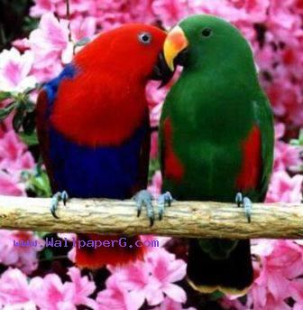 Download Love birds - Love and emotion-Mobile Version