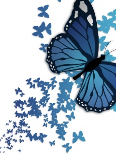 Blue butterfly ,wide,wallpapers,images,pictute,photos
