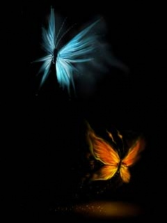Creative butterfly ,wide,wallpapers,images,pictute,photos