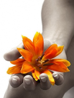 Flower on hand ,wide,wallpapers,images,pictute,photos