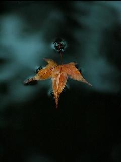 Soul of leaf