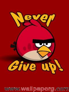 Never give up ,wide,wallpapers,images,pictute,photos