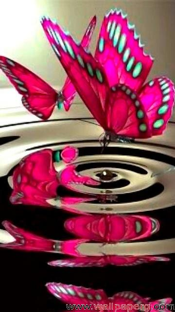 Download Pink butterfly - Abstract wallpapers-Mobile Version