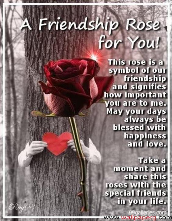 A frendship rose