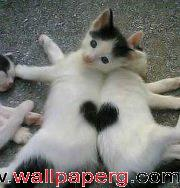 Love cat ,wide,wallpapers,images,pictute,photos