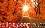 Autumn road ,wide,wallpapers,images,pictute,photos