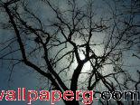 Tree ,wide,wallpapers,images,pictute,photos