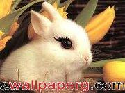 Cute rabbit ,wide,wallpapers,images,pictute,photos