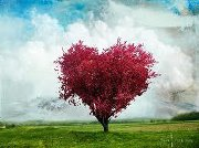 Tree heart ,wide,wallpapers,images,pictute,photos