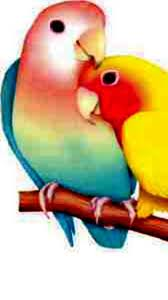 Love parrot ,wide,wallpapers,images,pictute,photos