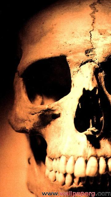 Skull 360640 ,wide,wallpapers,images,pictute,photos