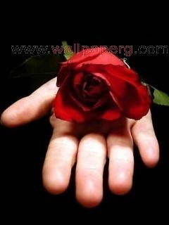 Red rose on love hand
