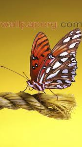 Beautiful butterfly ,wide,wallpapers,images,pictute,photos