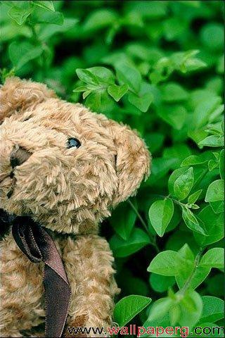 Bear doll ,wide,wallpapers,images,pictute,photos