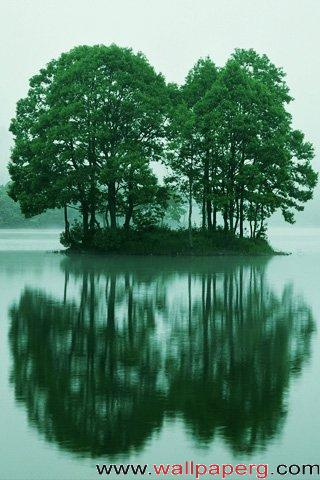 Trees reflection ,wide,wallpapers,images,pictute,photos