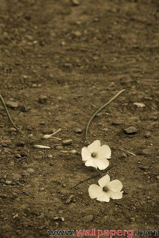 Flowers in the soil