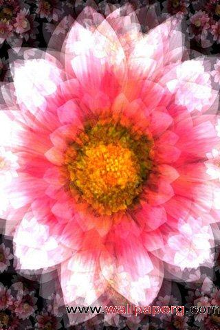 Smiling sunflower ,wide,wallpapers,images,pictute,photos