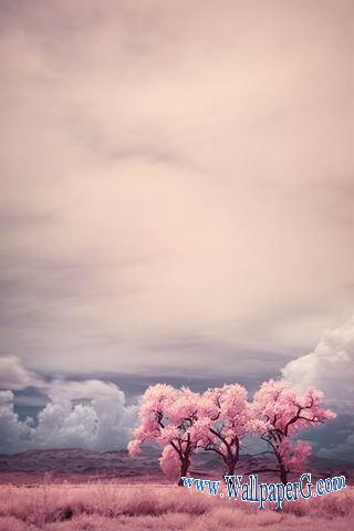 Pink world ,wide,wallpapers,images,pictute,photos