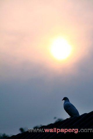 Sunset and lonely bird