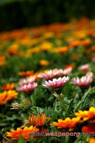 Flowers of garden