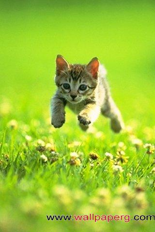 Leap in the kitten