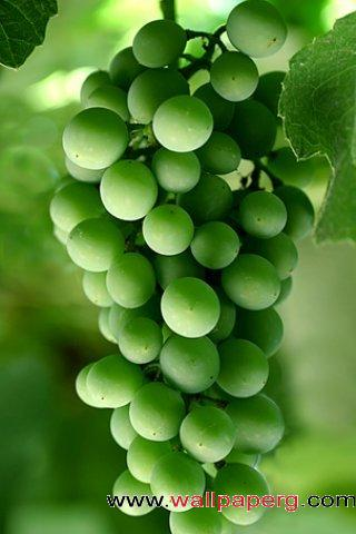 Dark green grapes