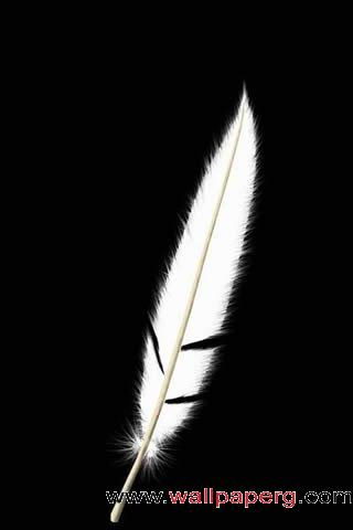 Feather brush ,wide,wallpapers,images,pictute,photos