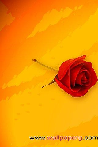 Romantic rose ,wide,wallpapers,images,pictute,photos