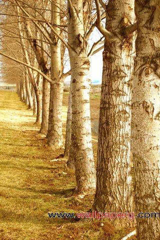 Row of trees