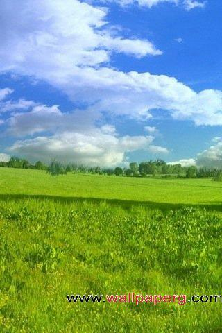 Field landscape ,wide,wallpapers,images,pictute,photos