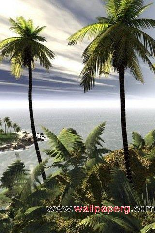 Island coconut tree
